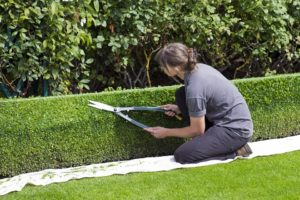 Pruning your garden for security with your locksmith Bristol